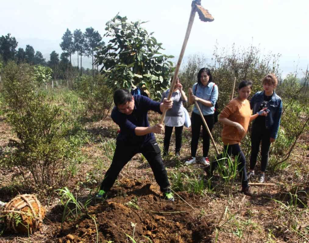 开展植树活动